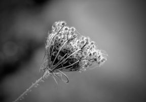 C 0122bw by Placi1