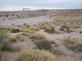 Trips to Petrified Forest NP 22 by Sting-raptor