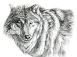 Grey Wolf - portrait by sschukina