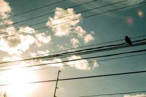 pigeon on wire by desruines