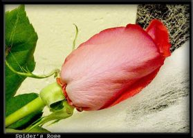 Spider's Rose by ebontier