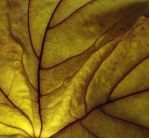 autumn gold by graphic-rusty
