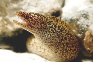 little moray by mishkuu