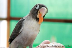 See, I eat my carrot by emmil