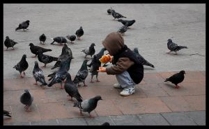 Little boy is feeding pigeons by let-me-be-yours