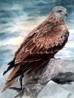 Red Kite, After The Rain by zara2020