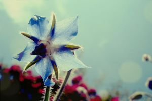 Fairy tale about blue flower by CocoaDesert