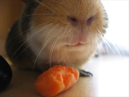 I like carrot. by Rubbyxd