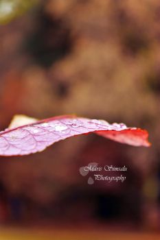 Autumnal drops by Meireis