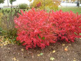 Canadian Fall Colours 61 by Aswang301