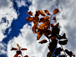 Colours of Autumn -1- by IoannisCleary
