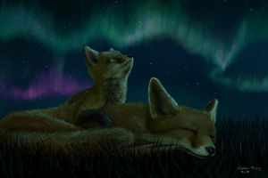 Aurora Foxes by heylorlass