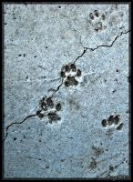 The Cat was HeRe by OzGeEcN