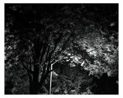 tree at night by photozz