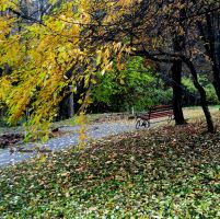 autumn and a bench in the park by florina23