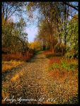 Autumn Path by LadyAquariusStock
