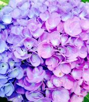 Two-toned Flowers by Nacht-Stein