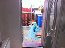 PIRL: Can I come in please by PonyWithACrispyFace