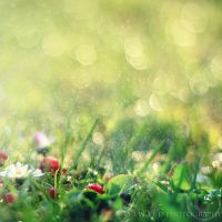 summer rain by Orwald