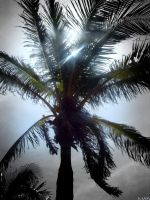 Palm Tree by partyboy9289