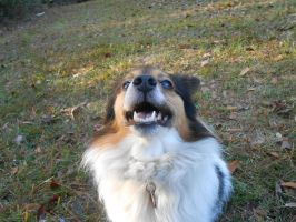 Treader's happy face by Colliequest