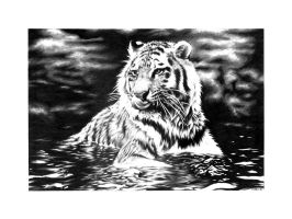 Siberian Tiger Cooling Off by villa5