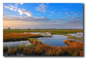 Viera Wetlands 2.0 by mycarisfaster