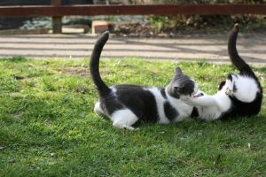 cats 4 by tsb-stock