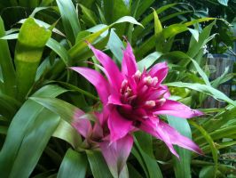 Bromeliads Are Pineapples Too by september28