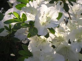 White FLora by wickedlady