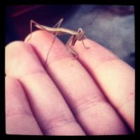 Baby Praying Mantis by Reconnection