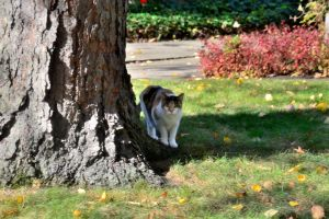 Big Cats in the neighbor hood by TomKilbane