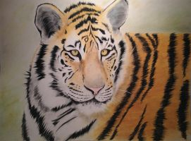 Tiger by pessimischick
