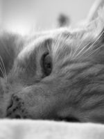 Le Chat by PERNicious-1