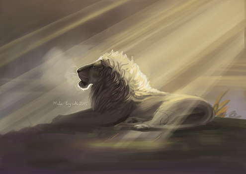 Unfinished lion by tigon