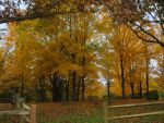 Remembering Autumn by Mistshadow2k4