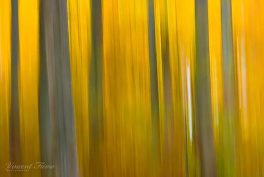 Autumn abstraction... by vincentfavre