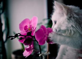 Julien and orchid by kotanfis