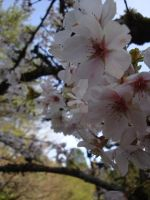 Blossoms by Lillagon
