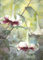 Lilies by louise-art
