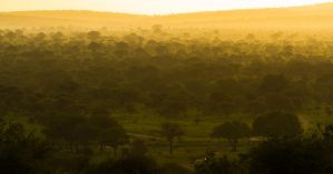 Tarangire Sunset II by SCHPONG