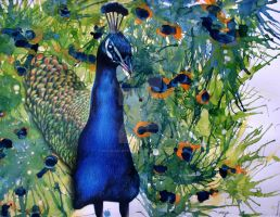 Peacock by poodleslistentokorn