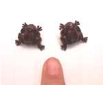 Miniature chocolate frog earrings Harry potter by MiniSweetx