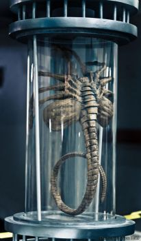 Facehugger by DarthInvidia