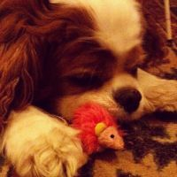 ~Timmy the Cavalier and Toy Mouse~ by Belynx16