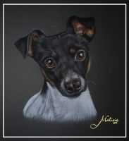 Terrier by Malina-art