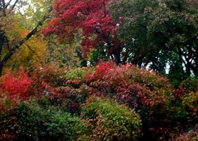 My Fall Picture 2 by Guilloten