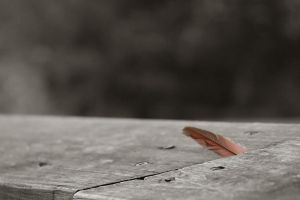 lone feather by seanpigeon