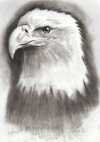 Eagle drawing by Hulkster77