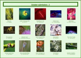 October submissions - 3 by Macro-Beginners-Club